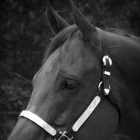Livingston Horse Show Association