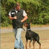 D'Andrea Professional Dog Services