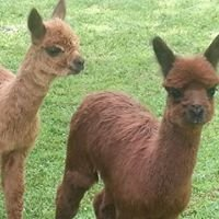 Autumn Ridge Alpacas