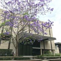 UQ Dorothy Hill Physical Sciences and Engineering Library
