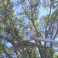 John's Stump & Tree Removal