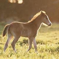 Colorado Horse Property