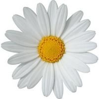 Ruths Floral Design Studio