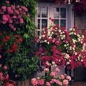 Flower Cottage of Deer Park