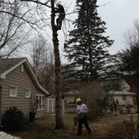 True Vine Tree Care
