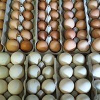 Coal Creek Poultry Auction