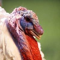 Turkey Hill Farm