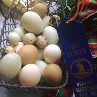 Newport Agricultural Fair