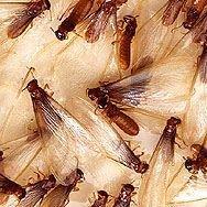 Advance Tech Pest Management Services, Inc.