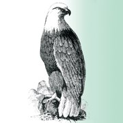 Eagles Weed Control & Lawn Service