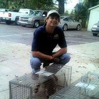 All Creatures Wildlife Control