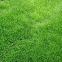 South Central Indiana Lawns