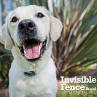 Invisible Fence Brand - North Star