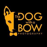 The Dog with a Bow Photography