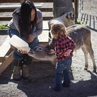 Kilby Kountry Pony Parties and Petting Zoo