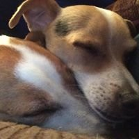 Friends Of Michigan Animal Rescue FMAR