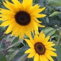 ABC Plant Nursery and Garden Center