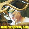 Antler Taxidermy & Professionals Of Africa Hunting Safaris