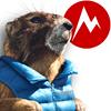 Marmot thumb