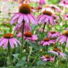 Christine Darnell Gardens