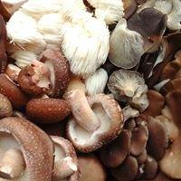 Pura Vida Mushrooms