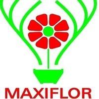 Maxiflor Lda