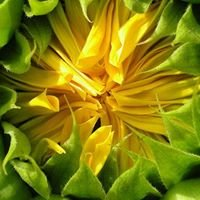 Sunflower Plant Service