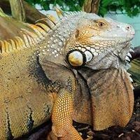 Kernow Exotics - Dinner-time Pets