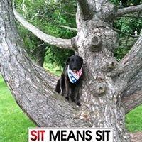 Sit Means Sit of SE Michigan
