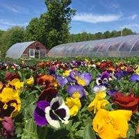 Sirko's Greenhouse & Farm
