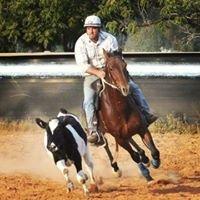 Gamberlee Australian Stock Horses