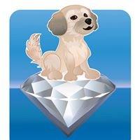 Diamond Dogs House of Grooming