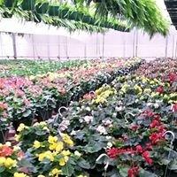 Edwards Nursery & Greenhouses