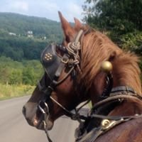 Custom Carriage and Trail Rides of the Finger Lakes