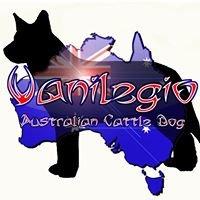 Vanilegio (Australian Cattle Dog Kennel)