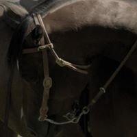 Lucky Horse Photography