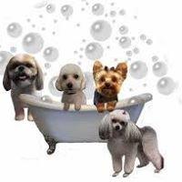 Dog Grooming by Becky Van Rooyen