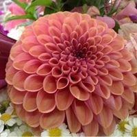 Bountiful Brookfield Blooms