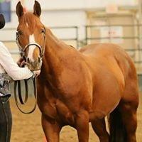 Kaliber Equine Services