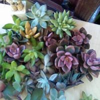 Unusual Creations Plant Nursery and Gifts-Bromeliad & Succulent Specialists