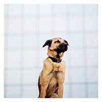 The Dog Life