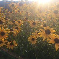 Holland Wildflower Farm
