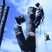 Melbourne Tree Removal at Bedford Tree Works