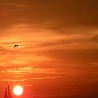 Longboat Key-Beachcomber on Gulf of Mexico-Vacation Rental 505