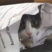 Copy Cat Graphics LLC