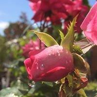 Creative Landscaping & Garden Center