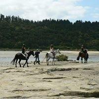Greenhithe Pony Club