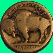 Penny Buffalo Company