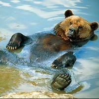Bear Water Treatment