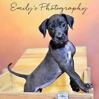 Emily's Photography